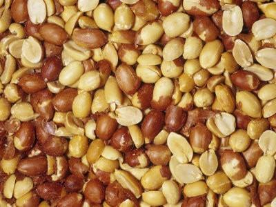 kikiriki-peceni-slani